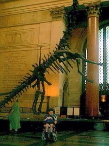me with the Barosaurus skeleton in the Hall of Saurischian Dinosaurs, American Museum of Natural History, NYC. Early June, 1999.